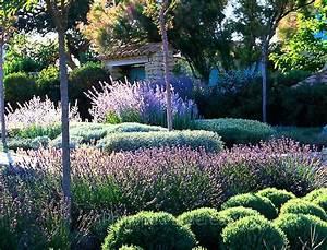 Plant De Lavande : massif de santolines santolina incana de sauges russes ~ Nature-et-papiers.com Idées de Décoration