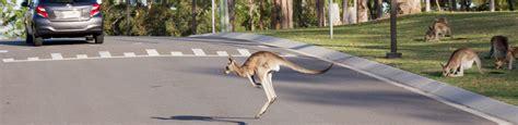 rspca queensland injured wildlife quiz