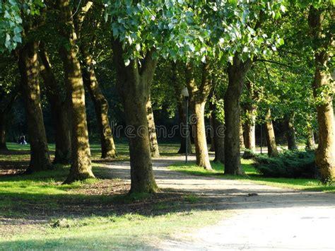 alberi piani e un pioppo in un parco fotografia stock immagine di aereo parco 44459138