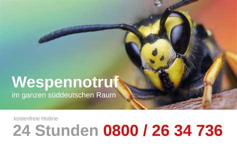 Nelkenöl Gegen Wespen by Wespen Im Fensterrahmen Bienen Und Wespen Im