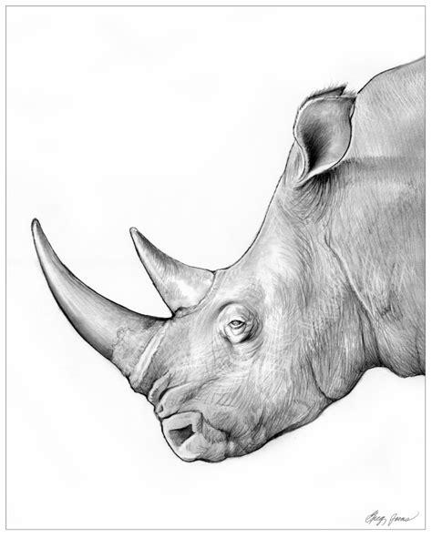rhino  gregchapindeviantartcom  atdeviantart