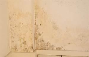 Wie Bekämpfe Ich Schimmel An Der Wand : wie entferne ich schimmel wundersch ne wie entferne ich schimmel joedesigns wie entferne ich ~ Sanjose-hotels-ca.com Haus und Dekorationen