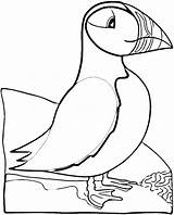 Puffin Coloring Pages Bird Puffins Printable Atlantic Print Crafts Birds Sheets Realistic Patterns Super Newfoundland Cartoon Colouring Animals Embroidery Quilt sketch template