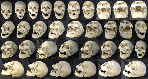 Skull Reference Favourites By Chrispanatier On Deviantart