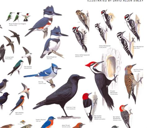 kinds of birds in your backyard 28 images attract