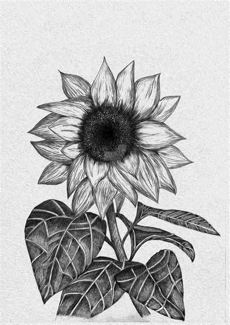 sunflower sketch  stefanogemi  deviantart