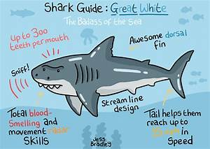 Squid Bits   Shark Guide  Great White