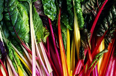 rainbow chard all about colorful rainbow chard with recipes