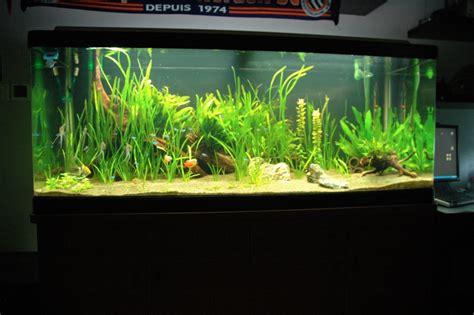 500 litres fish