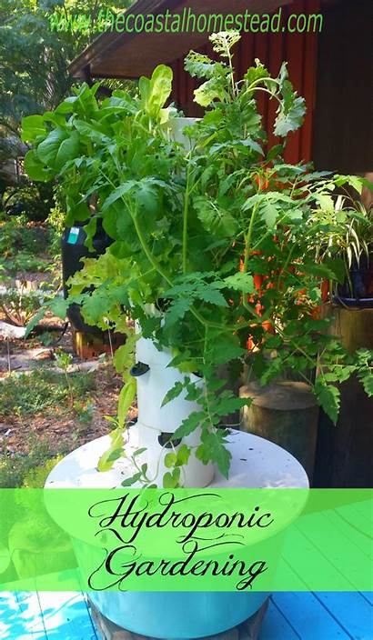 Hydroponic Gardening Aeroponic Growing Soil Without