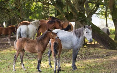 outcry  healthy  forest foal  put