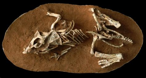 Dinosaur Hatch Time Was Similar To Reptiles