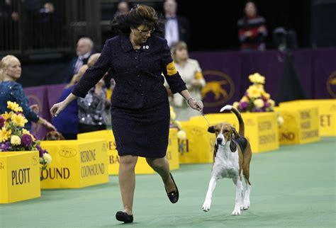 national dog show        tv
