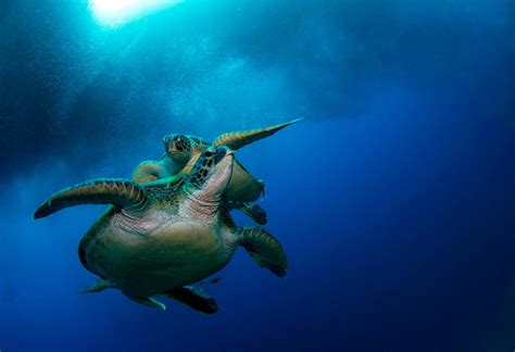 How To Scuba Dive - scuba diving padi dive courses in moalboal