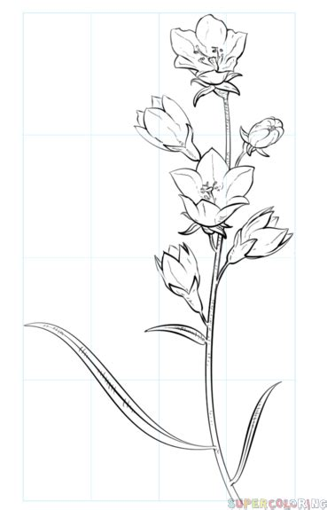 draw  bell flower step  step drawing tutorials
