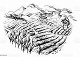 Munnar Indien Botanique Plantations Thé Herbaty Plantacji Pejzaż Plantage Vitis Vigne Vinifera Farmer Vektoren Wiejski Krajobraz sketch template