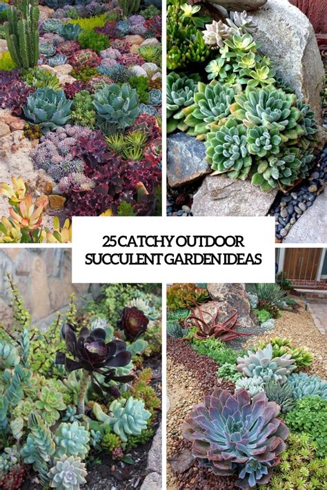 catchy outdoor succulent garden ideas digsdigs
