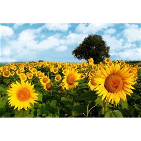 frasi i fiori frasi e aforismi sui fiori frasi aforismi