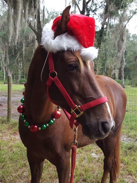 santa hat  horse  pony  day shipping equine