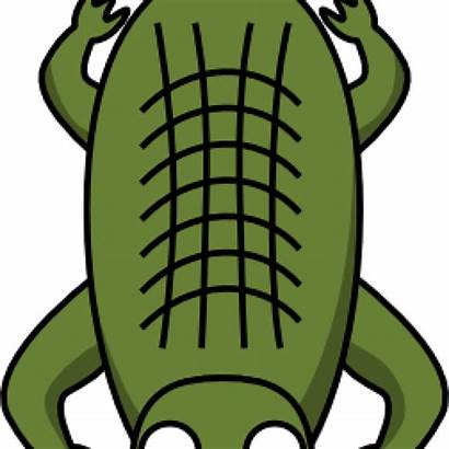 Alligator Clipart Clker Clip Did Know Facts
