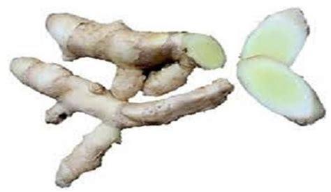 manfaat temu putih  kesehatan manfaatcoid