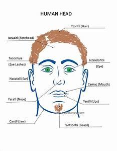 Human Body Diagrams