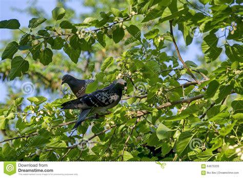 Tauben Auf Dem Balkon Tauben Auf Dem Balkon So Vertreiben