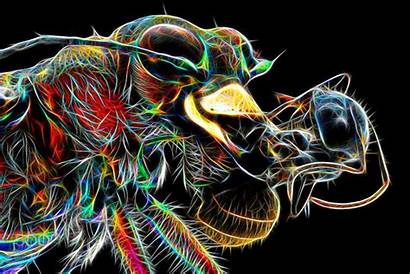 Fractals Insect