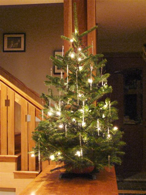 tabletop christmas tree app evergreens