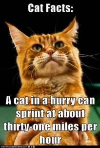 cat fact cat facts animal facts