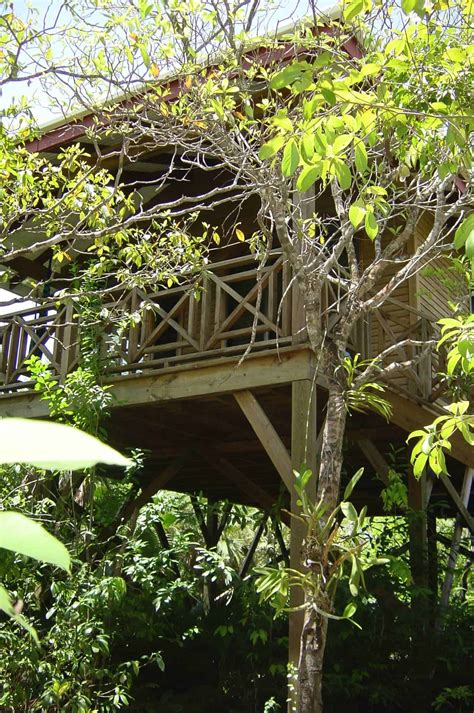 Belize Treehouse Hotel Rooms At Hamanasi Resort