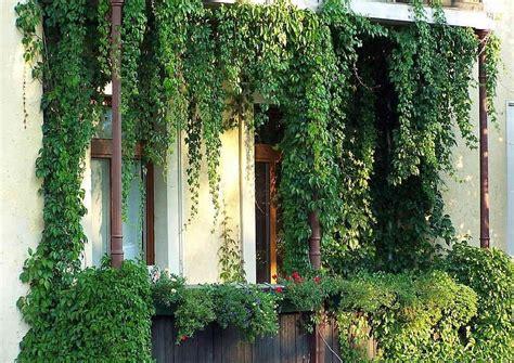 Zaun Begrünen Immergrün by Balkon Ideen Worauf Es Bei Der Gestaltung Ankommt Ich