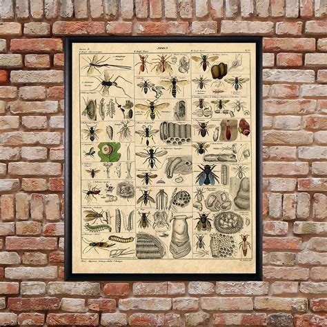 Vintage Insect Poster Bee Print Insects Decor Bee