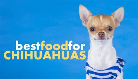 dog food  chihuahuas    avoid