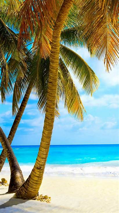 Palm Trees Tropical Beach Iphone Tree Wallpapers