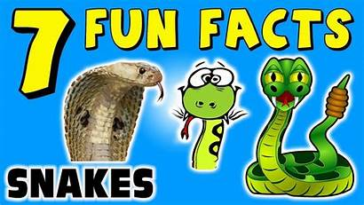 Facts Snakes Fun Reptiles Funny Learning Colors