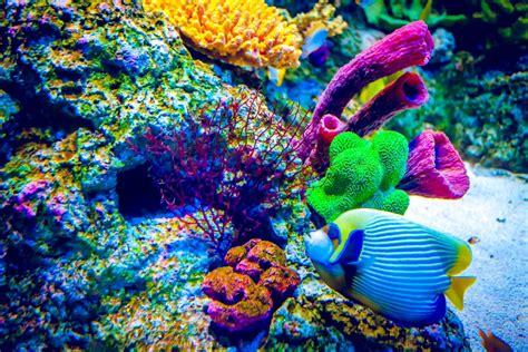 fruit d aulne aquarium are corals animals plants or rocks wonderopolis