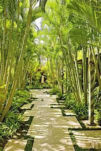 Die besten 25 tropische pflanzen ideen auf pinterest for Garten planen mit schnell wachsende zimmerpflanzen