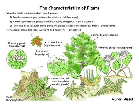 plant classification smore newsletters