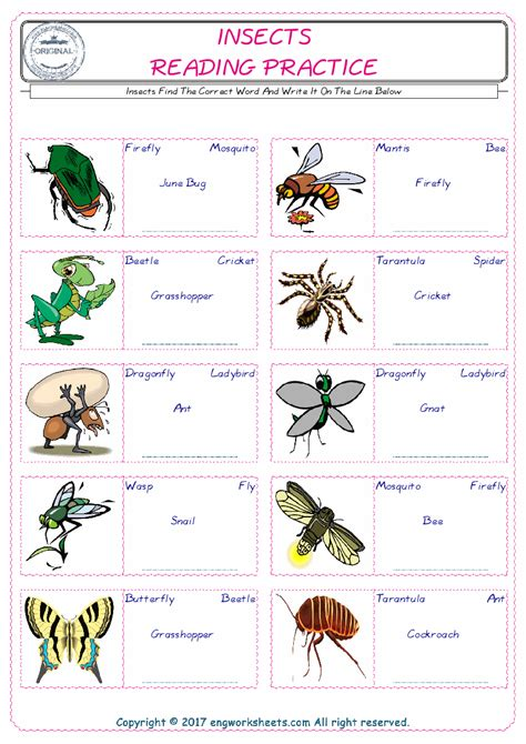 insects esl printable picture english dictionary