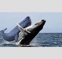 Whale Porn Imgur
