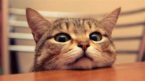Funny Cat Desktop Wallpaper ·① Wallpapertag