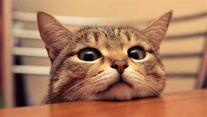 Cat Desktop Funny Background Face Close Wallpapertag
