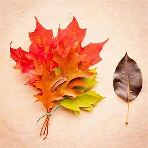 Feuille De Pierre Prix : bouquet de feuilles d 39 automne sur le fond en pierre photo ~ Dailycaller-alerts.com Idées de Décoration