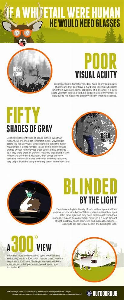 Deer Infographic Eyesight Hunting Works Vision Whitetail