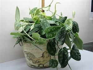 Pflanzen Die Wenig Licht Brauchen Heißen : 1001 ideen f r zimmerpflanzen f r wenig licht ~ Lizthompson.info Haus und Dekorationen