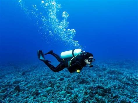 dive definition dive meaning and history merriam webster