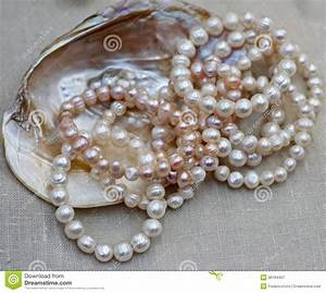 Mother Of Pearl Necklace With Original Oyster For Sale By Jewele Royalty Free Stock Photography ...