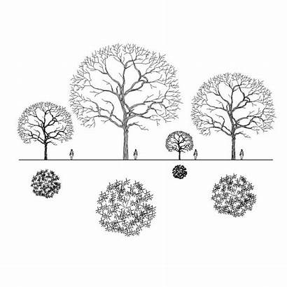 Tree Plan Trees Drawing Architecture Plans Landscape