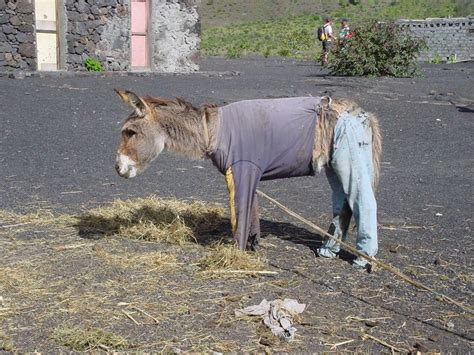 donkey donkey pictures donkey show pictures search
